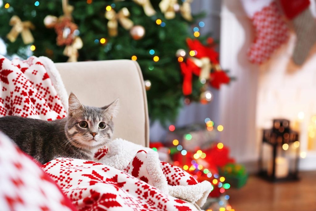 Get the perfect gift for your cat this Christmas