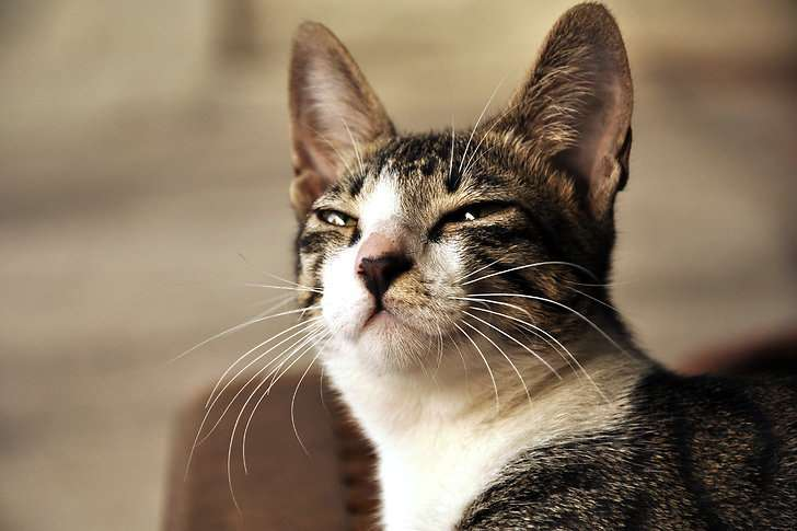 5 things you do wich your cat hates