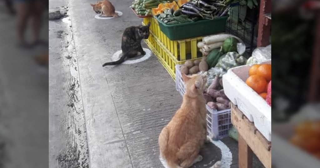 Viral Photos Show Cats Socially Distancing Same As Humans