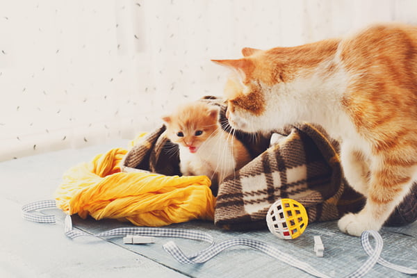 Scruffing a Cat — Why You Shouldn't Do It and How to Restrain a Cat the Right Way
