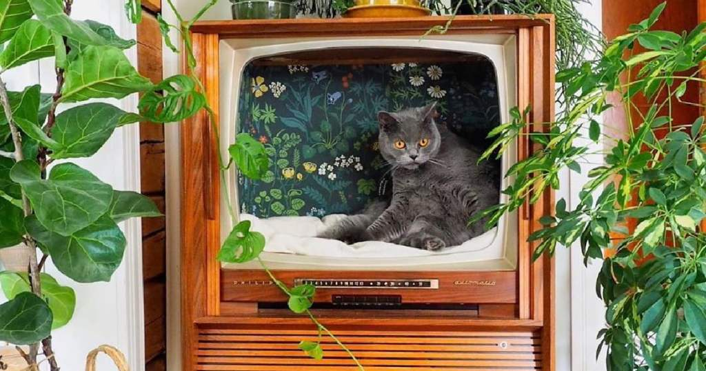 Craft A Vintage TV Cat Bed For Your Far Out Feline