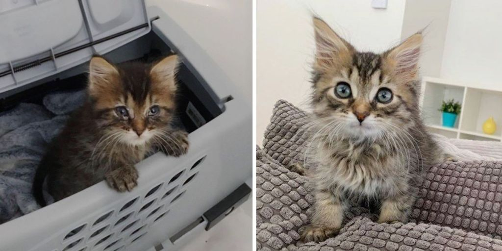 Kitten Blossoms into Fluffy, Happy Cat After His Life was Turned Around by Kindness