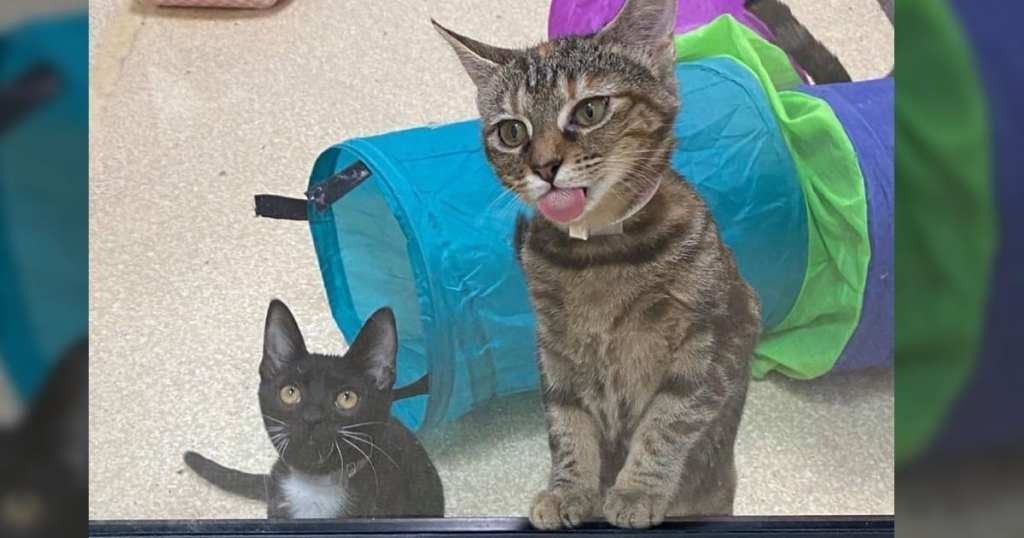 CattyCorner: Why Does My Cat Lick Plastic And Other Surfaces?
