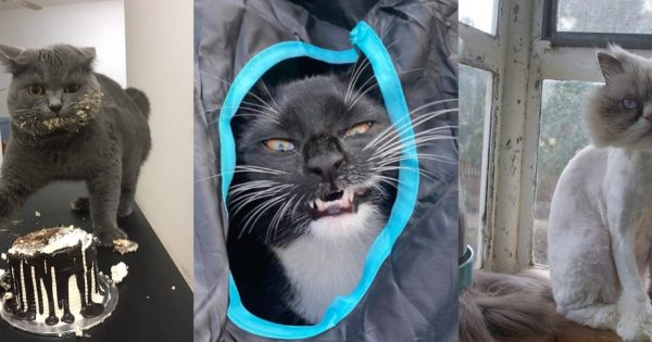 #UnflatteringCatPhotoChallenge Shows How Hilarious Cats Can be
