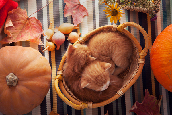 5 Tips for Having a Safe Thanksgiving With Cats