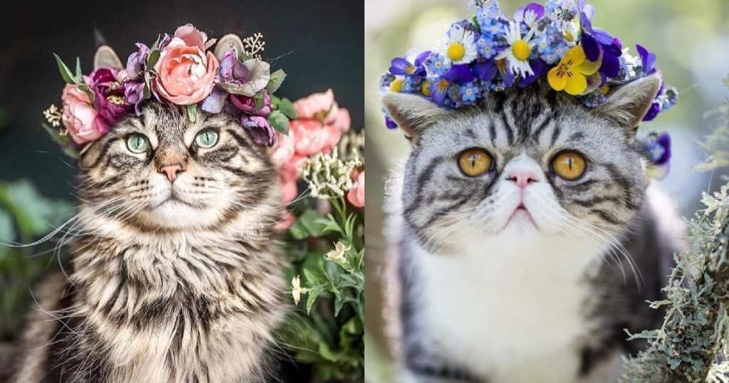 How To Make A Flower Crown For Your Cat