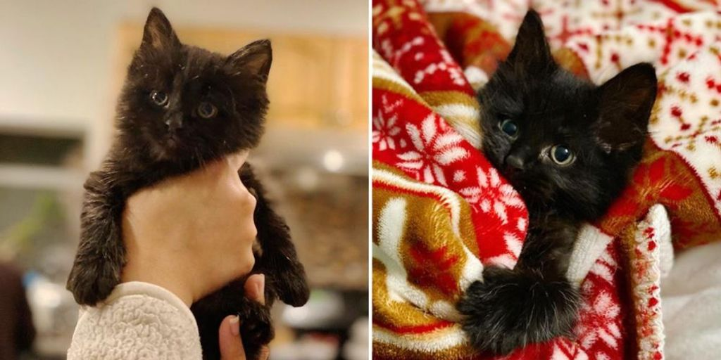 Small Kitten with Big Personality So Thrilled to Find Family of His Dreams After Life as a Stray