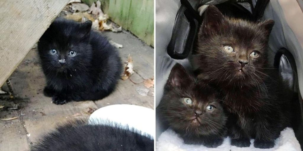 Kittens Wandered Up to Family's Yard and Found Help Just in Time Before the Cold Winter