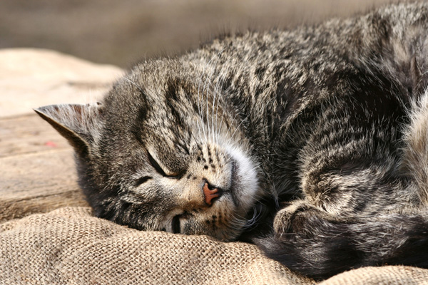 Cat Colors: 4 Reasons Your Cat's Fur Changes Over Time