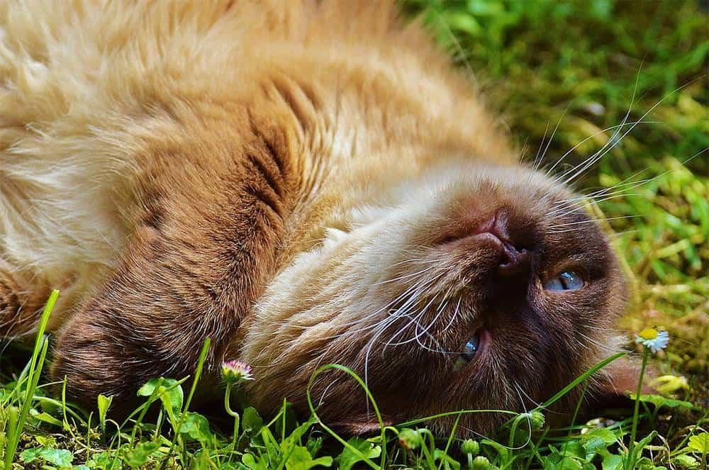 Creating a Pet Safe Garden
