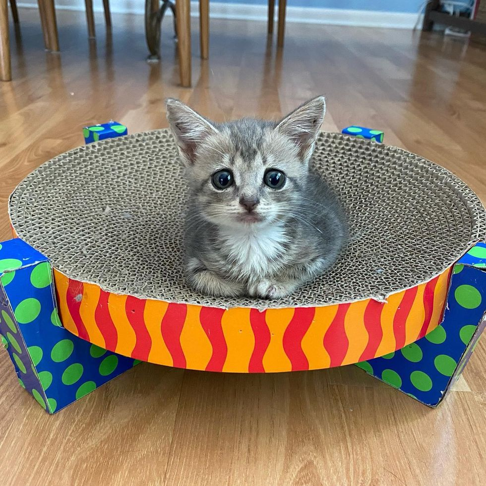 kitten big eyes