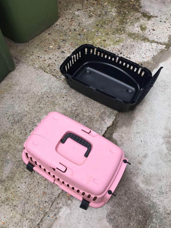 RSPCA Appeals for Information After six Kittens Abandoned Inside Cat Carrier