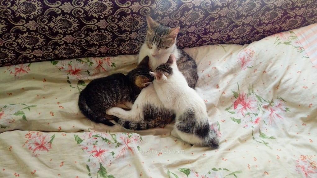 Kuzumu Cat – Both Sister and Milk Mother