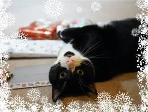 Christmas-presents-Secret-Paw0048.jpg