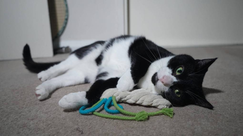 Blast from the Past: Fun with the Premium Rustling Cushion Cat Toy by 4cats