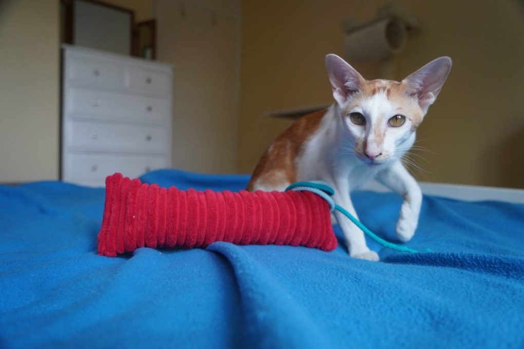 Cat in a Flat: 8 Ways to Prepare Your Flat for an Indoor Cat