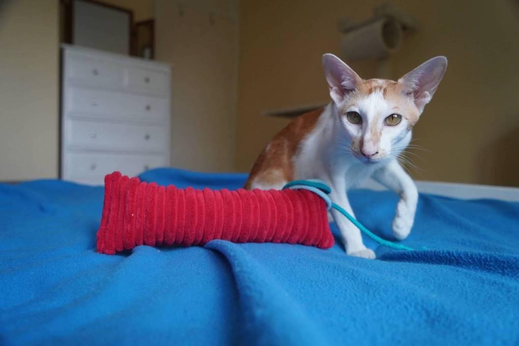 Trio of Kittens Dumped in Shoebox