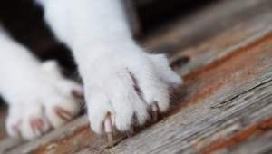 ban-cat-declawing-pittsburg-1.jpg