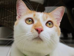 cat-fat-cat-super-fat-cat-574533.jpg
