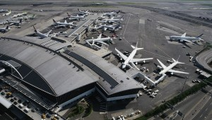 cat-found-jfk-airport-1.jpg