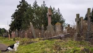 cemetery-cat-12-years-home-1.jpg