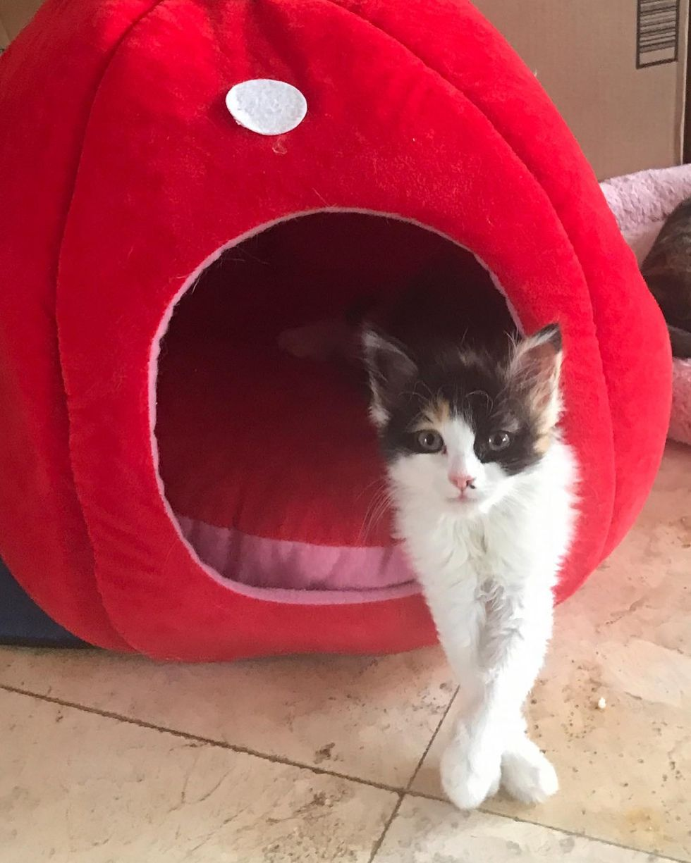 Kitten Found in Plant Nursery is So Happy to Be Helped and Determined to Get Back on Her Feet