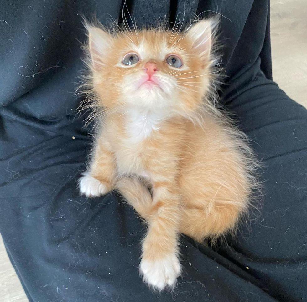 fuzzy fluffy kitten