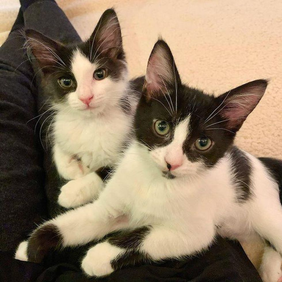 5 Kittens Found as Orphans Turn Out to Be Tenacious Lap Cats with So Much to Give