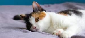 Calico_Cat_1200x535-1.jpg
