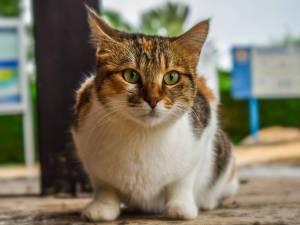 Kitten-Outdoor-Eyes-Cat-Animal-Stray-Cute-Kitty-3862046.jpg