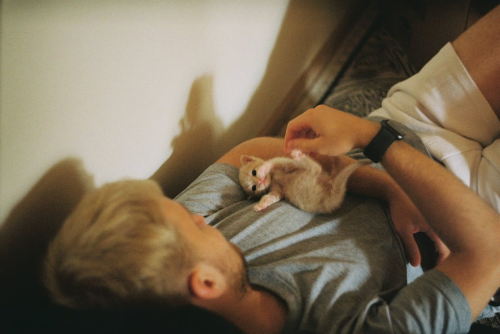 15 Reasons Why Cats are Good for us