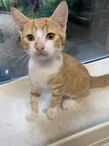 Pontypridd-kitten-BQ-rescue-ii.jpg