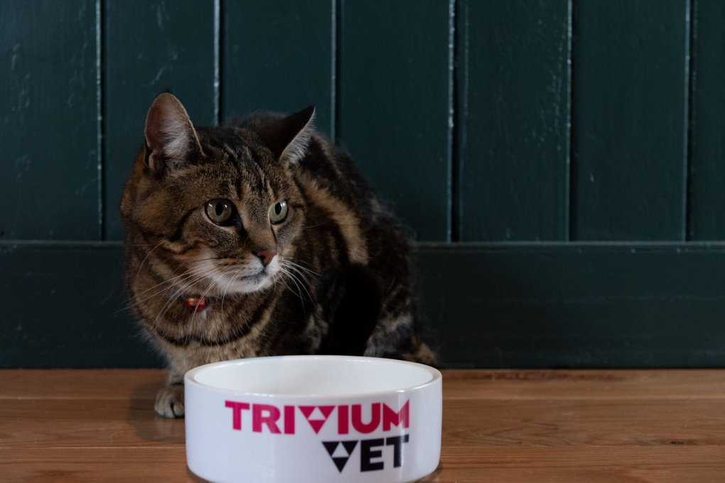 FDA's Centre for Veterinary Medicine Deems TriviumVet's Feline HCM Program Eligible for Expanded Conditional Approval Pathway