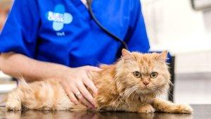 Veterinary-surgeon-Caroline-Watt-with-cat-Missy-at-Merton-animal-hospital.jpg