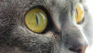 fedja-surprised-cat-1.jpg
