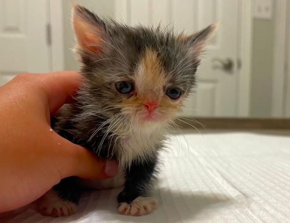 Kitten Overcomes Many Obstacles Since Birth and Transforms from Tiniest Wonder to Happiest Cat