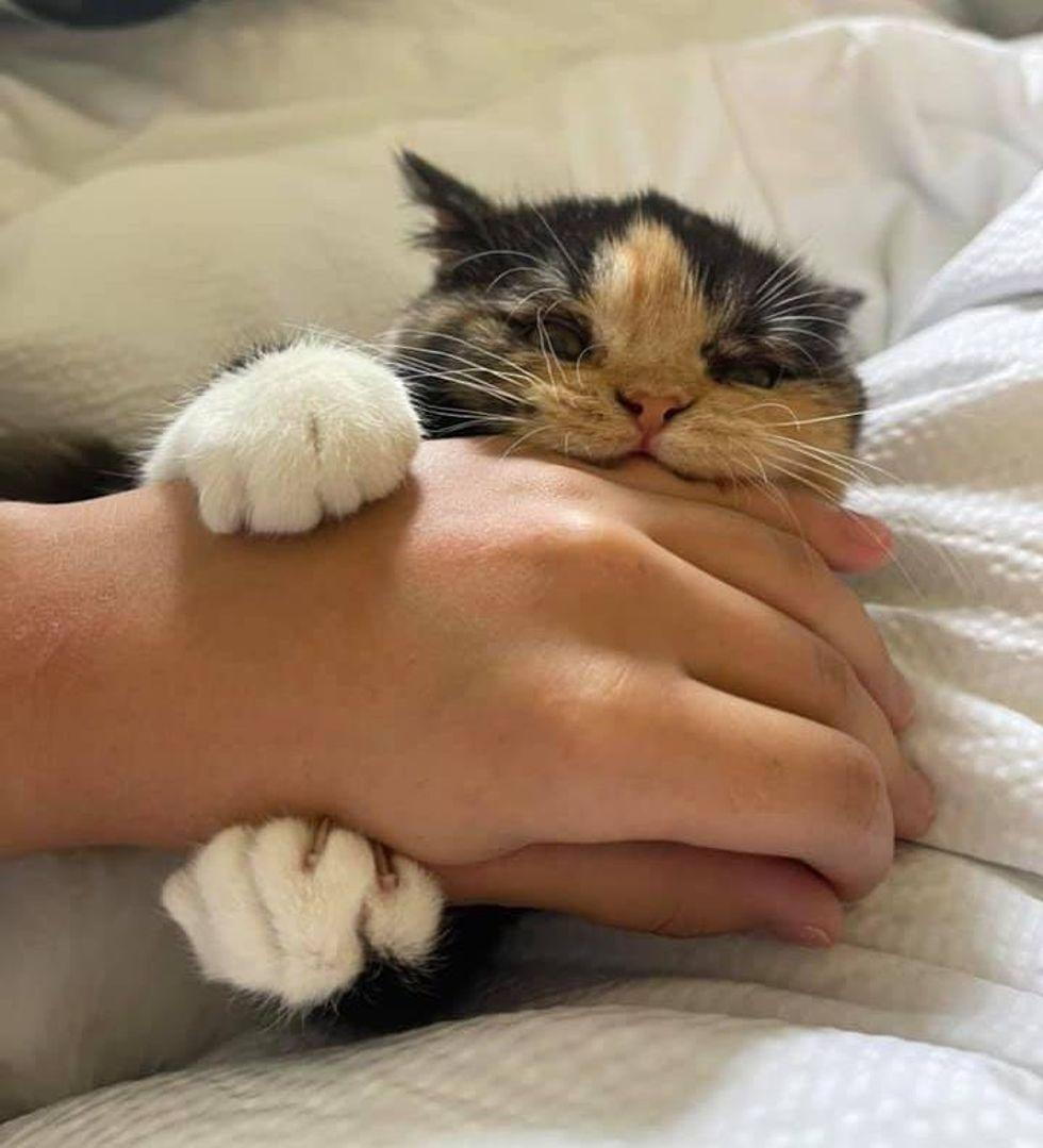 feisty calico kitten