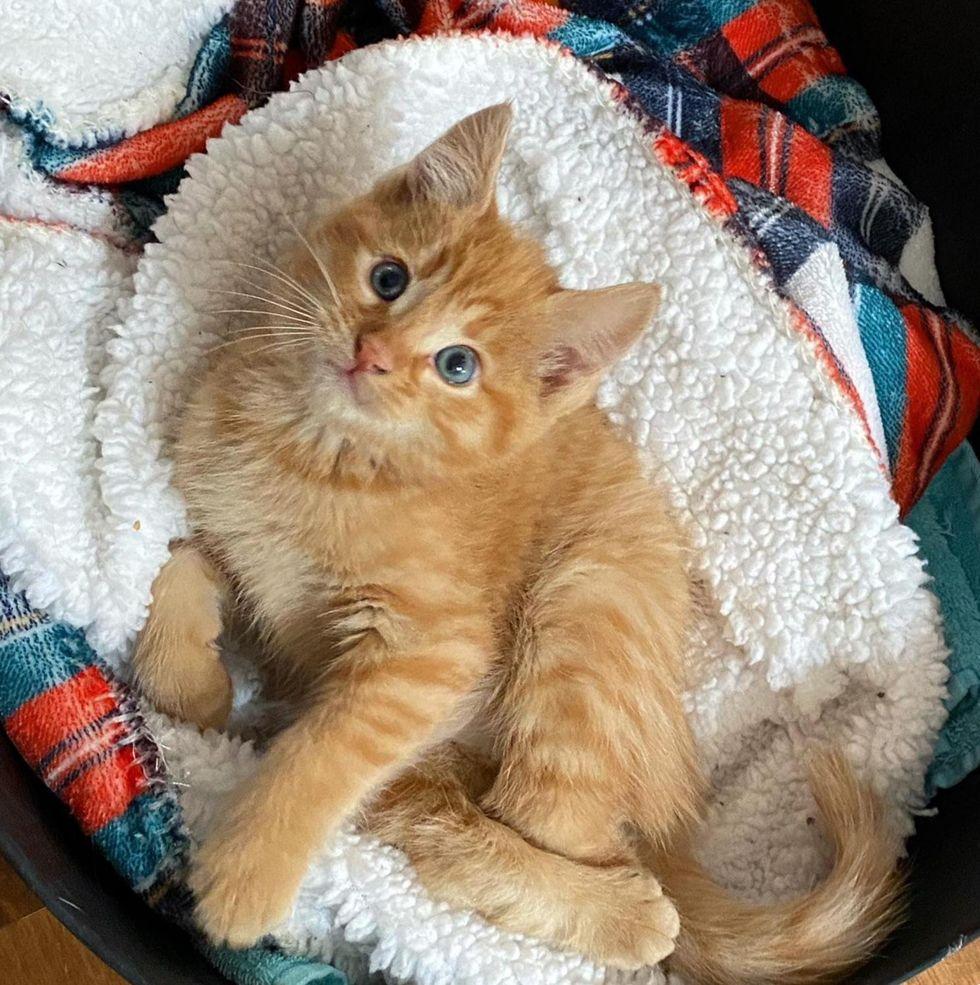 kitten twisted legs