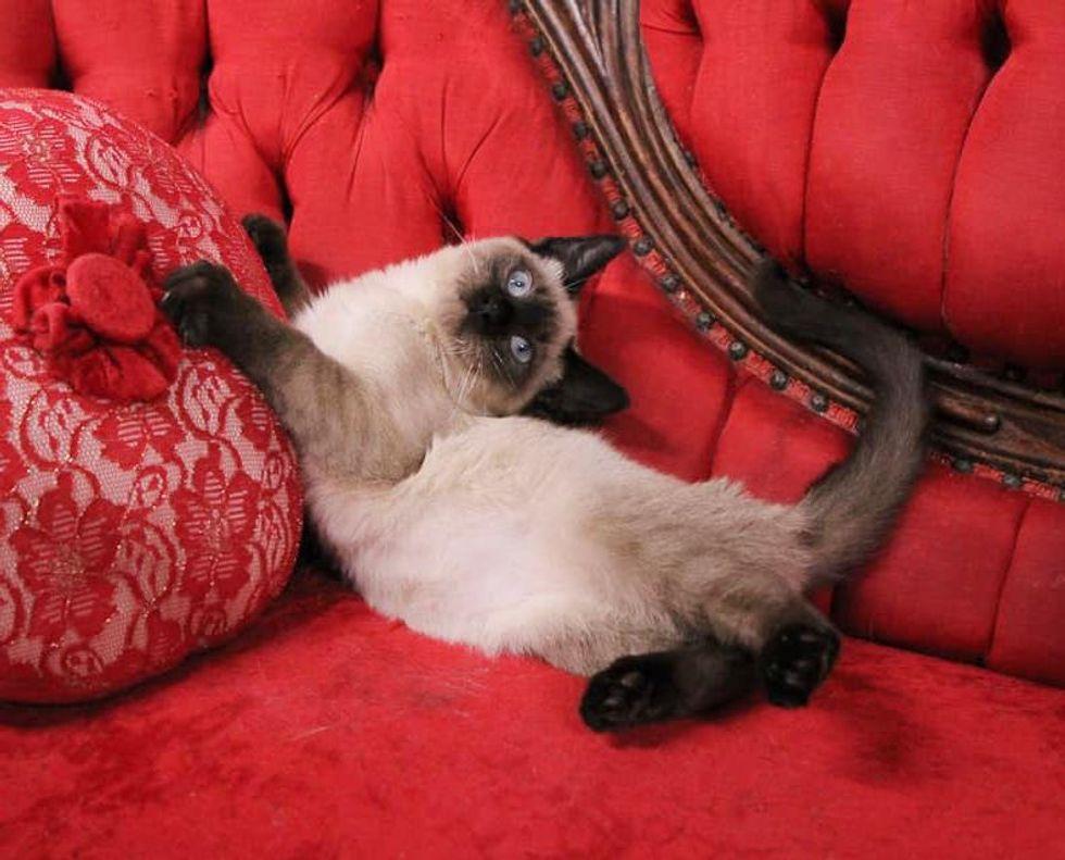 wobbly cat