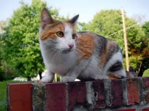 stray-cat-on-wall.jpg