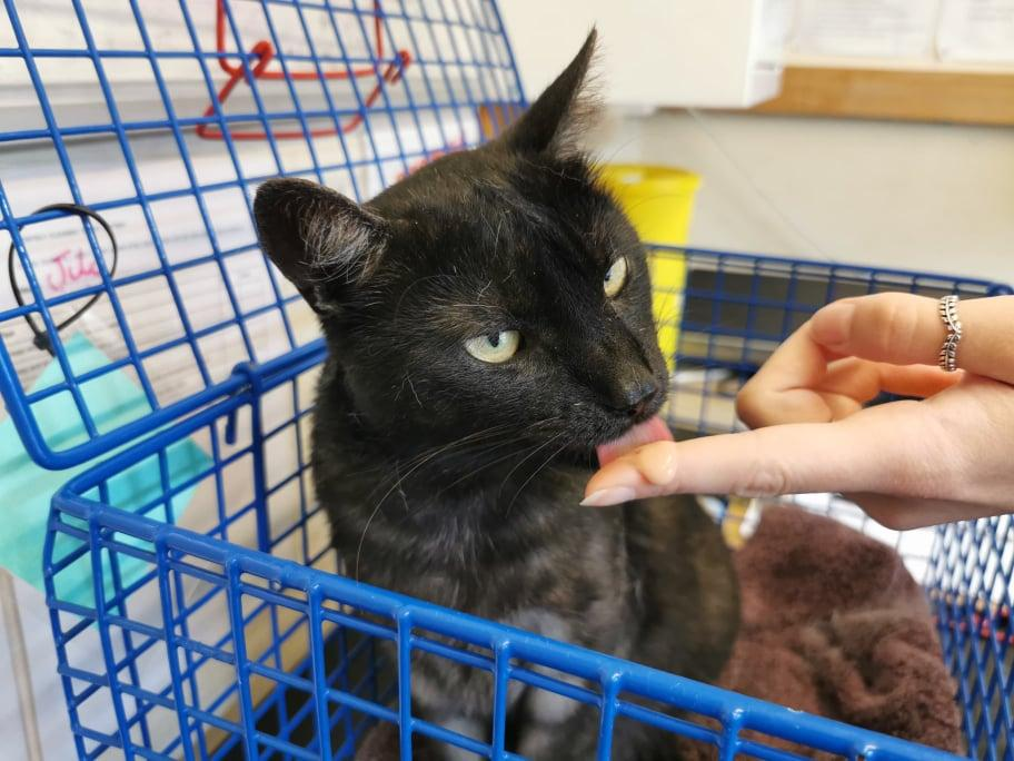Nervous Cat Has Spent More Than 200 Days Waiting to Find his Forever Home