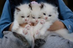 3 kittens being held