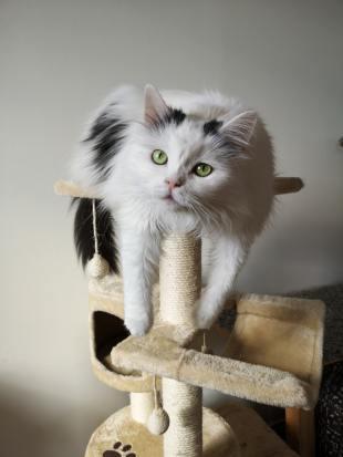 cat lounging on cat tree
