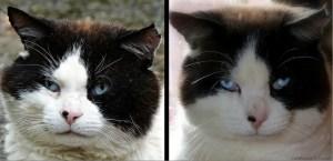 Domino, DF (during feral) & AF (after feral).