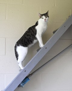 Climbing the steps that he hopes lead to your heart