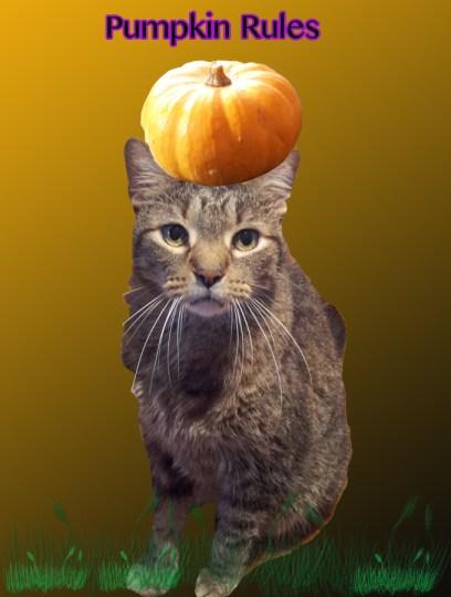 The much happier camper Rocky, thanks to pumpkin.