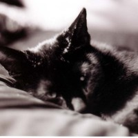 Black Cats: The Truth Behind the Darkness