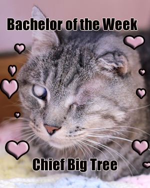ChiefBigTree_full bachelor