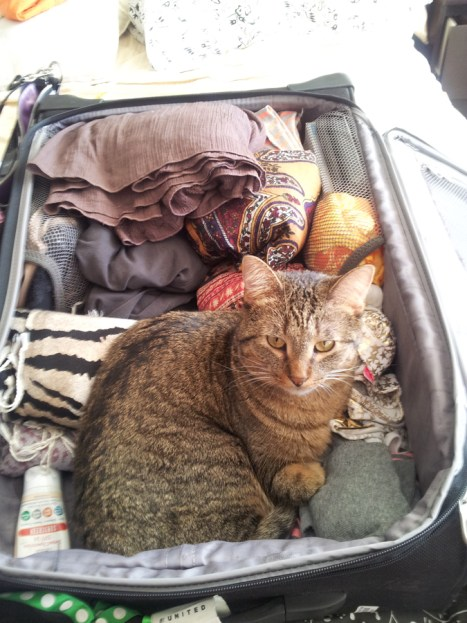 This kit sucks for rescue. Shoes will not help you help a cat. Read on to find out how to pack your kit.