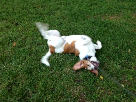 This doggie's rolling in the grass so far he's blurry!